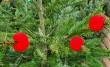 Bohócdoktorok, karácsonyfa adomány gyermekkórházaknak